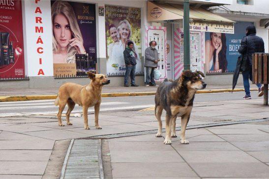 Apoio a cão comunitário já vale como lei no Espírito Santo