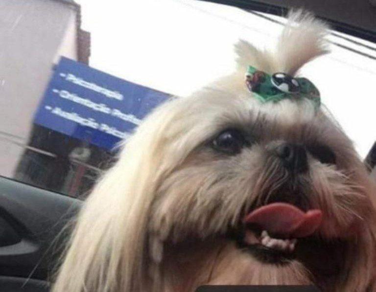 Família pede ajuda para encontrar cadela em Cachoeiro