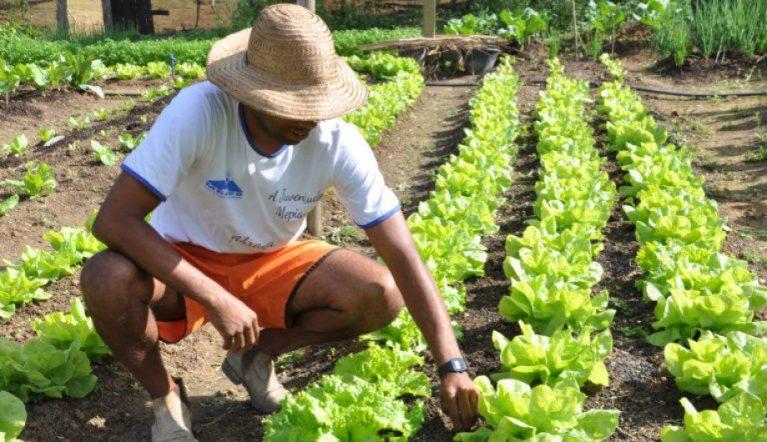 Propriedades de Cachoeiro são certificadas para produção orgânica