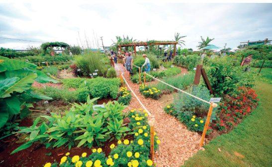 Grupo de trabalho vai elaborar agenda para agricultura sustentável