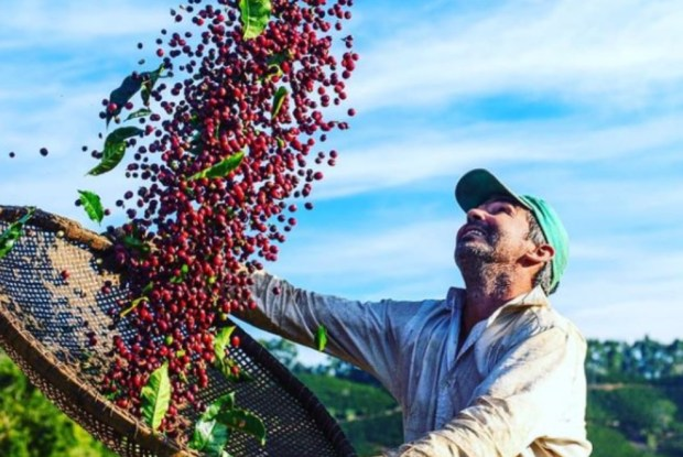 3ª Mostra de Café de Alegre vai promover os melhores grãos da região