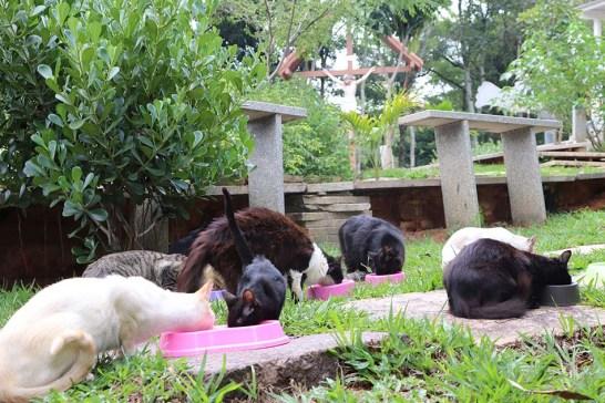 Leilão online para construir abrigo para os gatos do Santuário de Aracuí