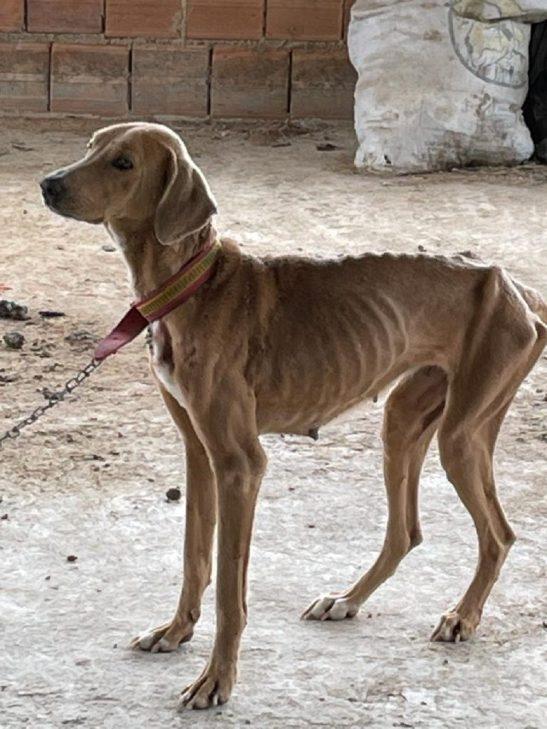 Mulher é presa por maltratar cão no bairro Elpídio Volpini
