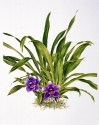Bunga ungu di balik ilalang