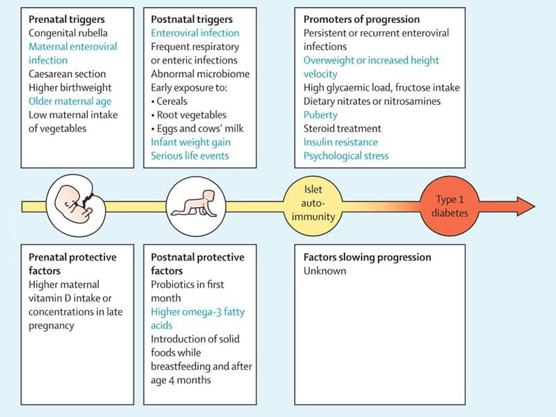 Environmental triggers and protective factors for islet autoimmunity and promoters of progression to type 1 diabetes