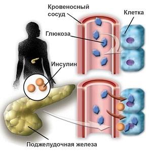 Гликемический профиль при беременности