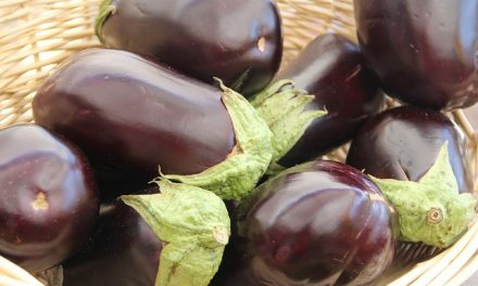 The Incredible, Edible Eggplant