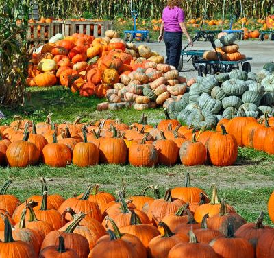 Pumpkin Selection, Preparation, and Nutrition