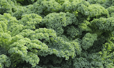 Tricks for Making Kale a Treat