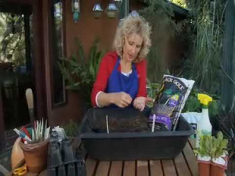 Starting Seeds Indoors for Gardening