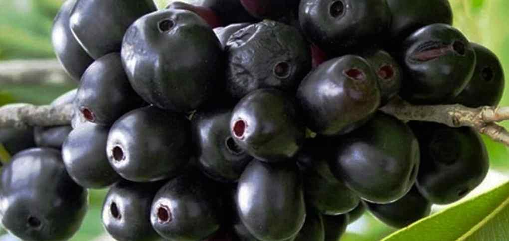 Jambul-fruit-for-diabetes