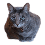 FSA and Cat eligible items