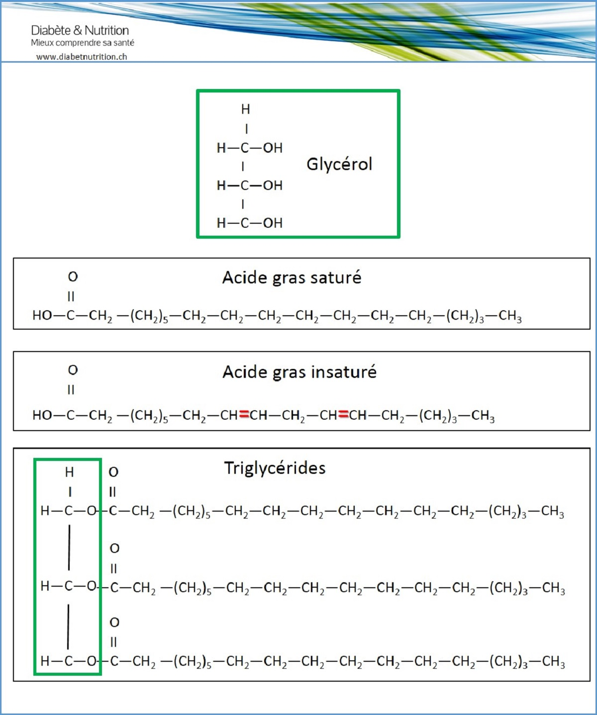 lipidi, glicerolo, acidi grassi, trigliceridi