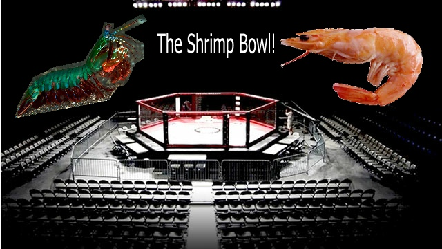 Shrimp Bowl 3