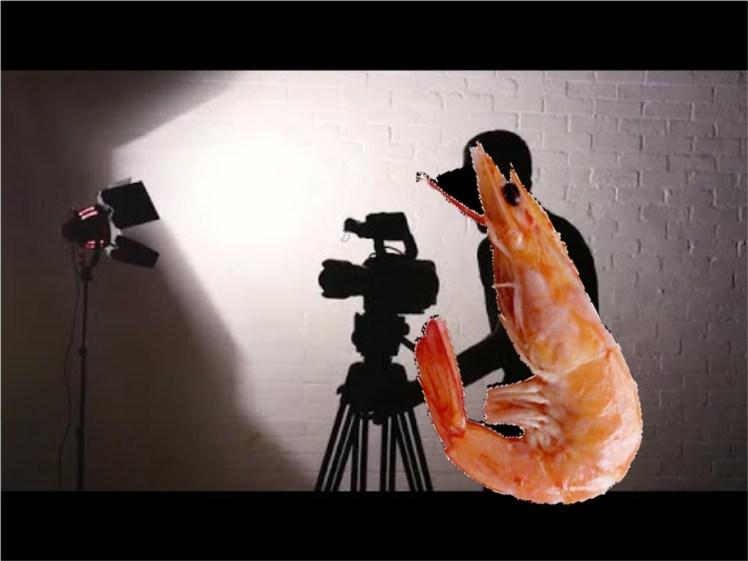 Shrimp Youtube