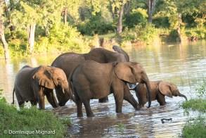 Eléphants profitant d'un lagon très temporaire. Deux jours après il sera vide.
