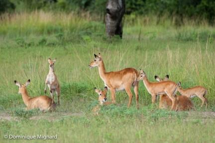 Zambie - La Vallée de la Luangwa à la saison des pluies.