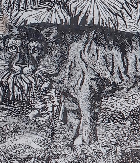 Détail du tigre©Gabrielle Saïd