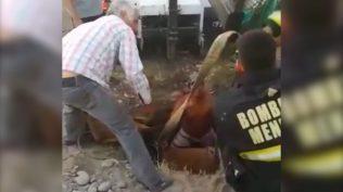 extraccion caballo1