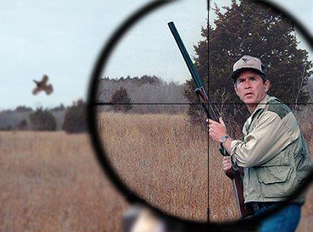 hunting_bush.jpg