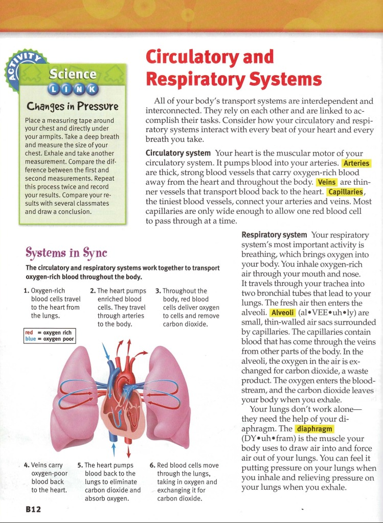 Sample 1 Heart And Lung Diagram – DIAGRAM Center