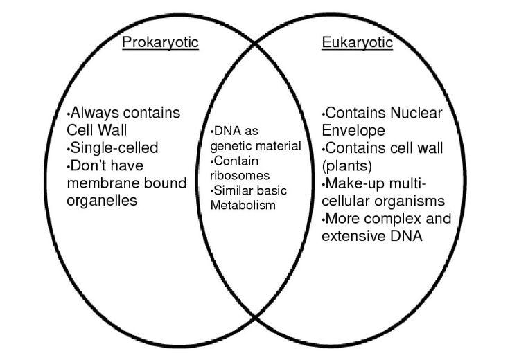 Venn Diagram Of Prokaryotes Eukaryotes And Viruses