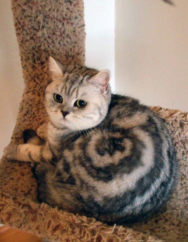 macska társkereső weboldalak