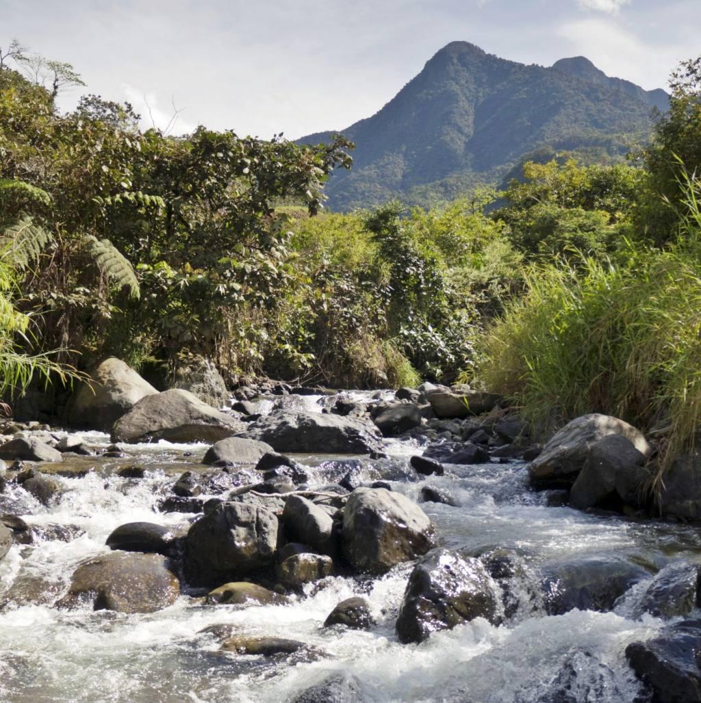 ¿Cuál es el rol de los ríos en las áreas montañosas tropicales? Docente de la USFQ publica en Science un estudio