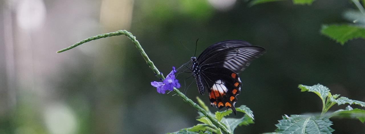 Ecuador mostrará su biodiversidad en el evento de ciencia ciudadana más grande del Hemisferio Sur