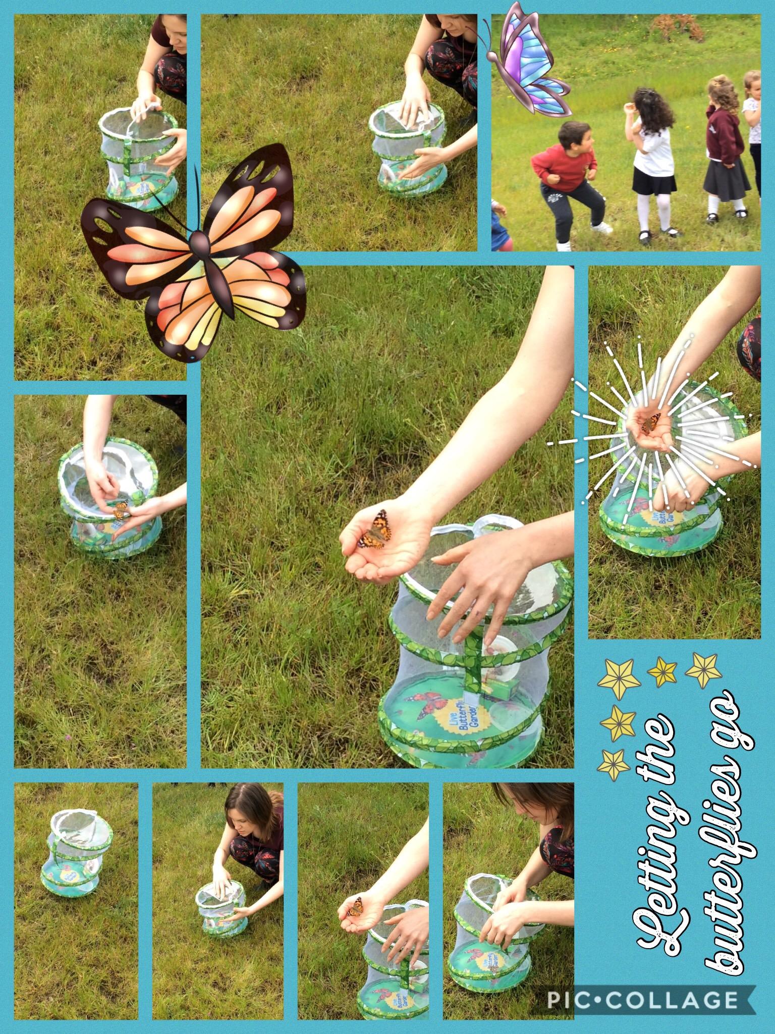 Bye Bye Butterflies!