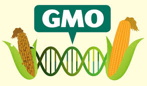 Peasant farmers call for adoption of genetically modified organism (GMOs)