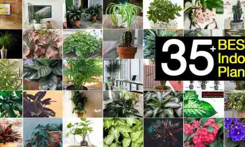 Rental Home Decor - plants