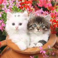 Cats in a Pot Diamond Painting Kit