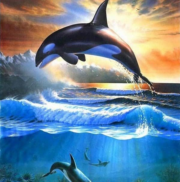 Killer Whale Diamond Painting Kit At DiamondPaintingKits.com