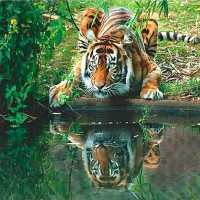 Crouching Tiger Reflection Diamond Painting Kit
