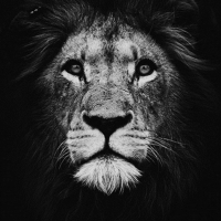 Black and White Lion Portrait Diamond Painting Kit