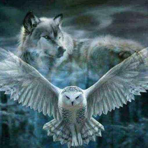 witte uil met wolf diamond painting