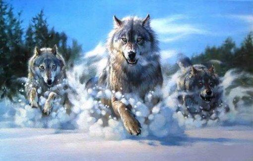 wolven in de sneeuw rennen diamond painting