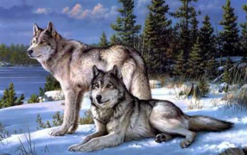 wolven stel diamond painting