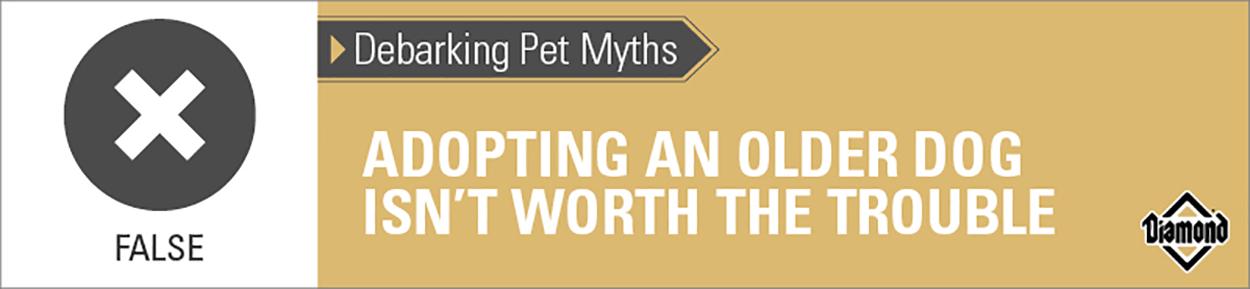 Adopting Senior Dogs Myth   Diamond Pet Foods