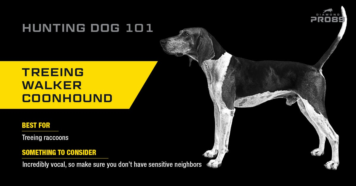 Treeing Walker Coonhound Hunting Dog | Diamond Pet Foods