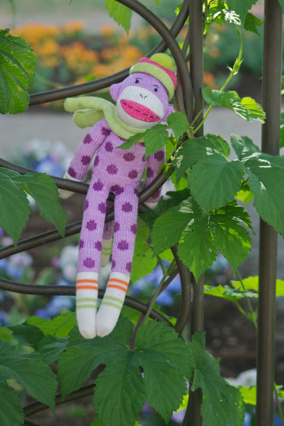 Sock Monkey Climbs a Vine