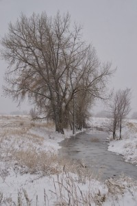 Snowy Creek with trees