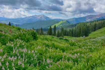 crested butte wildflower vista