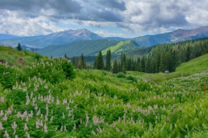 crested butte wildflower vista
