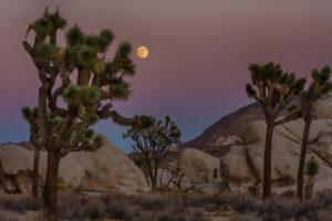joshua-tree-full-moon-trees-rocks