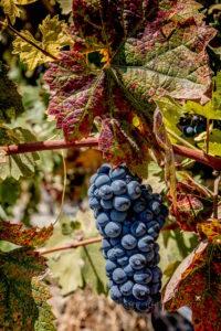 slo-wine-country