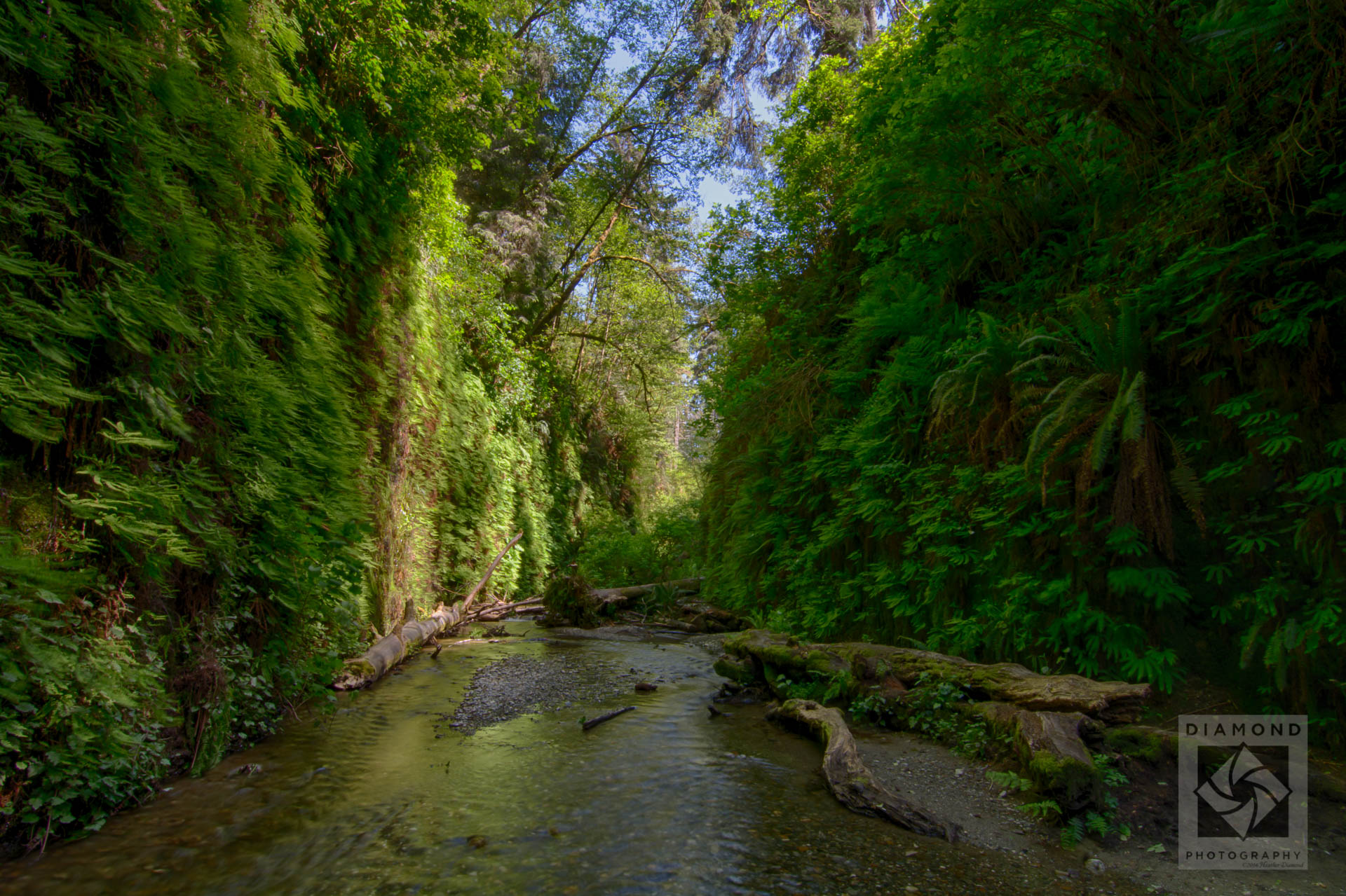 Hiking Fern Canyon photography tips