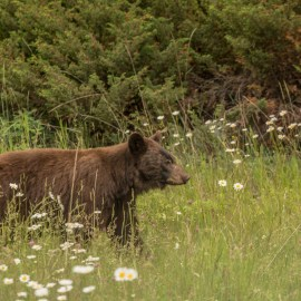 10 Tips for Keeping Bear Encounters Positive and Safe