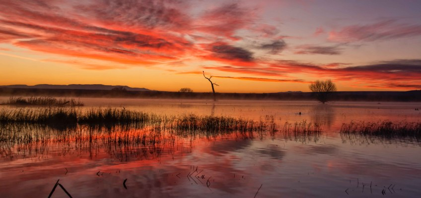 Sunrise at Bosque del Apache